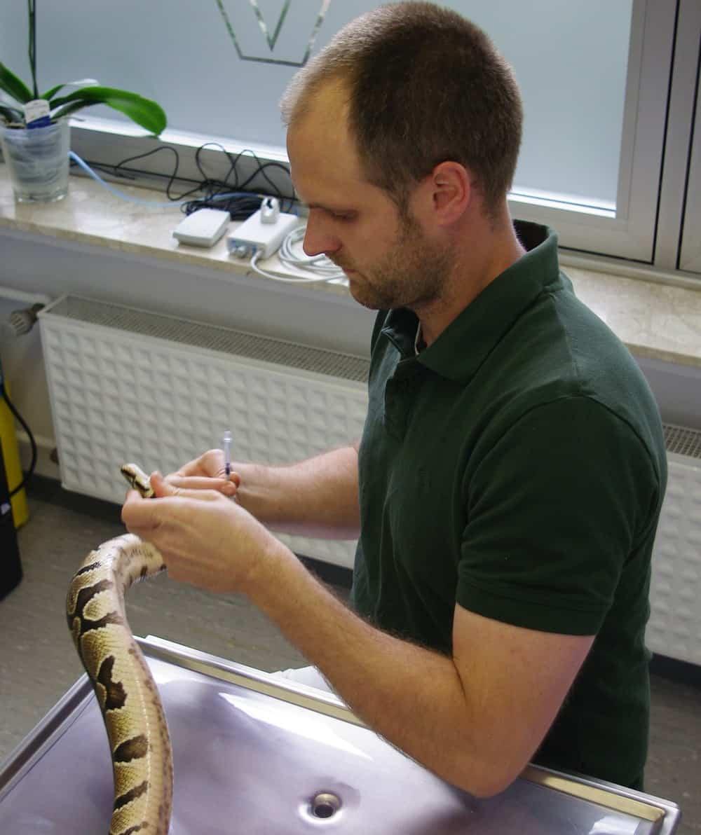 Tierarzt Patrick Weber